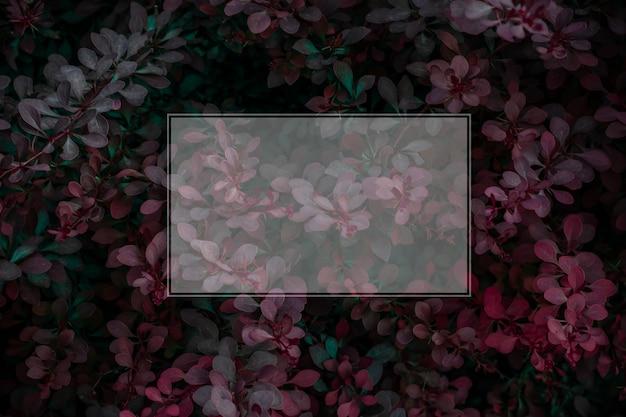 Autumn plants background with frame Premium Photo