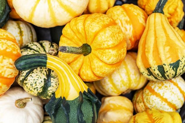 Осенний фон тыквы. закройте вверх различных декоративных мини тыкв на рынке фермеров. Premium Фотографии