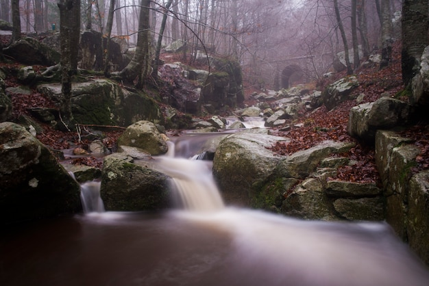 Autumn at river montseny, catalonia , spain Premium Photo