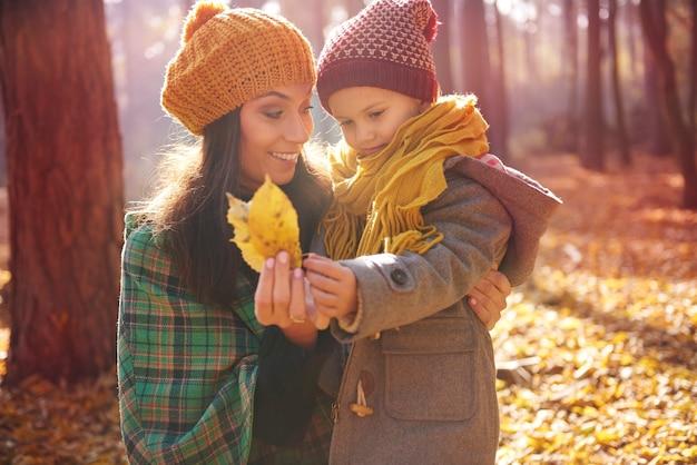 森の中の秋の自然 無料写真