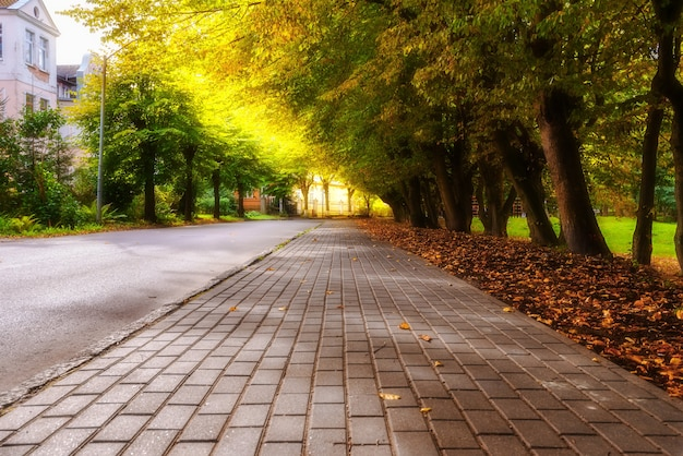 Autumn sidewalk with trees and fallen leaves in the city Premium Photo