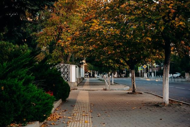 녹색 침엽수 덤불과 노란 잎을 가진 나무 가을 거리. 보도에는 촉각 타일 라인이 있습니다. 프리미엄 사진
