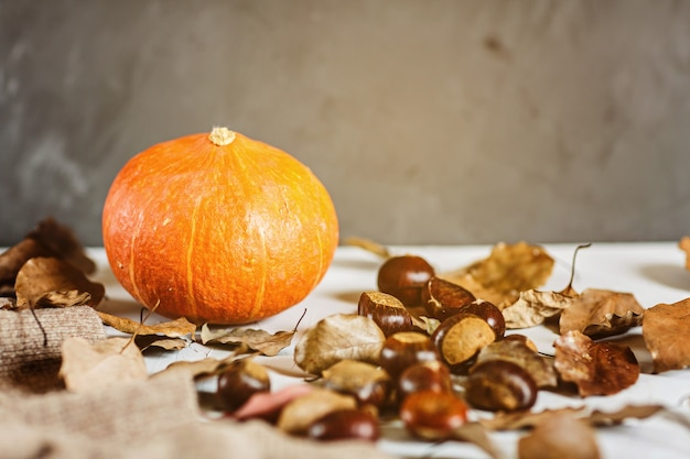Autumn thanksgiving. flat lay. pumpkin, chestnuts, knitted sweater lying on gray Premium Photo