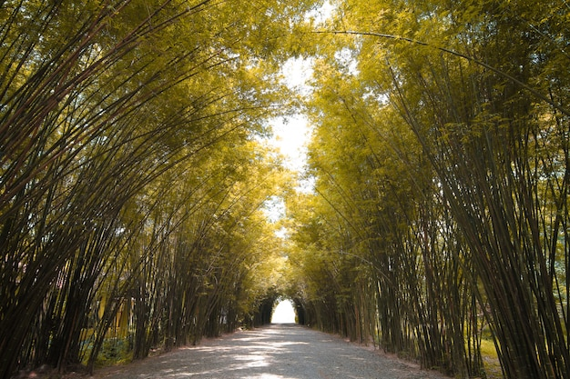 Autumn tone bamboo forest in thailand Premium Photo
