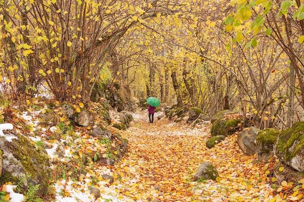 첫 눈이 내리는 가을 산책 무료 사진