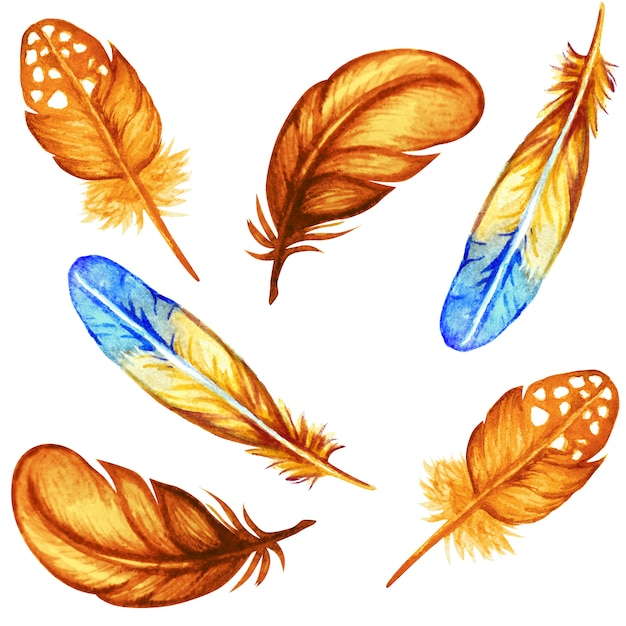 Autumn watercolor feathers collection isolated Premium Photo