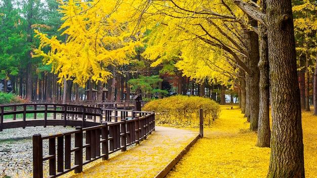 韓国、南怡島のイチョウの木と秋。 無料写真