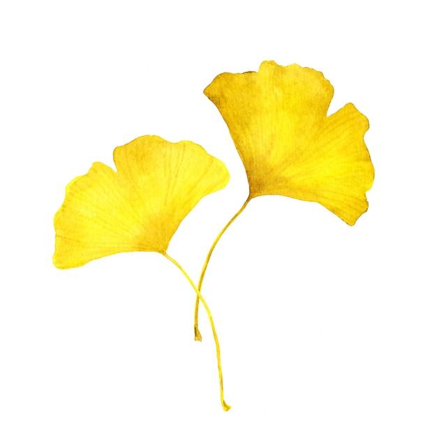 秋の黄色いイチョウの葉。季節の水彩イラスト Premium写真