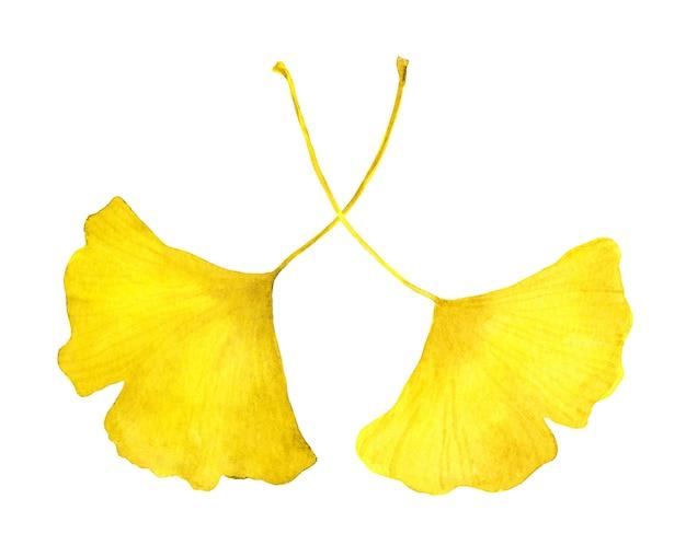가을 노란 은행 나무 잎. 수채화 계절 그림 프리미엄 사진