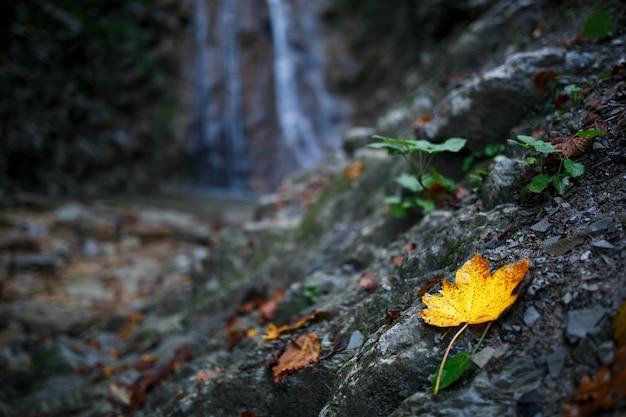 Autumn yellow leaf on a waterfall background Premium Photo