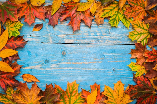 Autumn yellow leaves on old blue wooden. Premium Photo