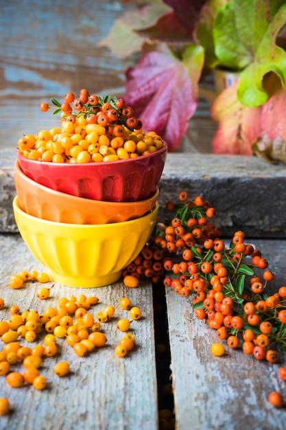 秋の食べ物のコンセプト Premium写真