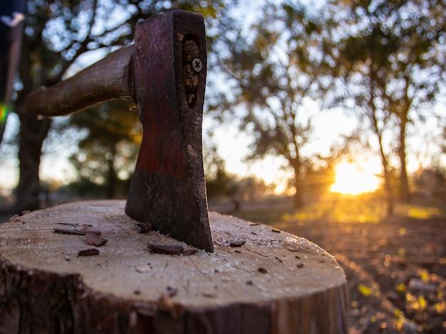 Ax stuck in a log, concept cut wood Premium Photo