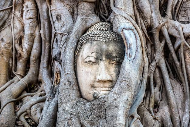 アユタヤ木の根の仏像の頭、ワットマハタート寺院、タイ Premium写真