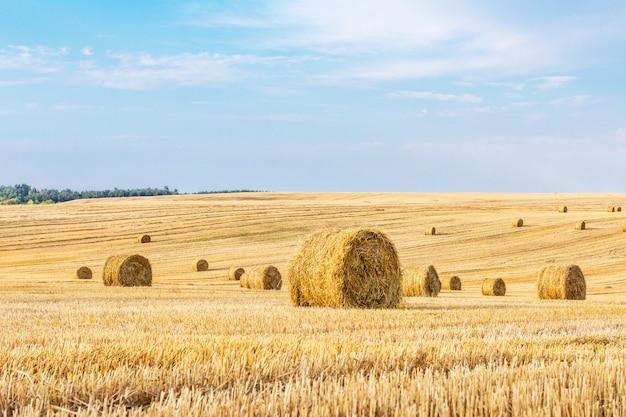 日没時のわらbaと収穫後の麦畑 Premium写真
