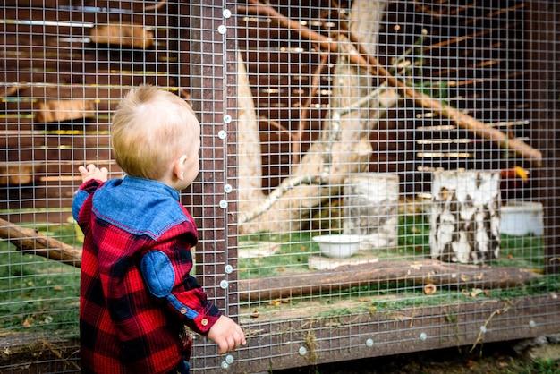 Мальчик ищет животное в клетке Premium Фотографии