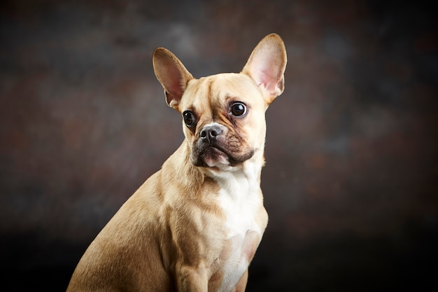 Портрет собаки Premium Фотографии