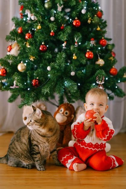 Ребенок ест яблоко, сидя рядом с кошкой перед елкой. фото высокого качества Premium Фотографии