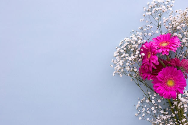 Baby's breath flowers and pink gerbera flowers above blue background Free Photo