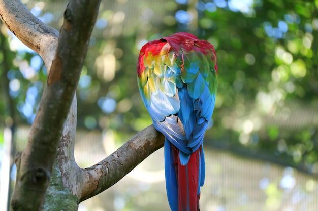 Back of a scarlet macaw perching on the tree, foz do iguacu, brazil, south america Premium Photo