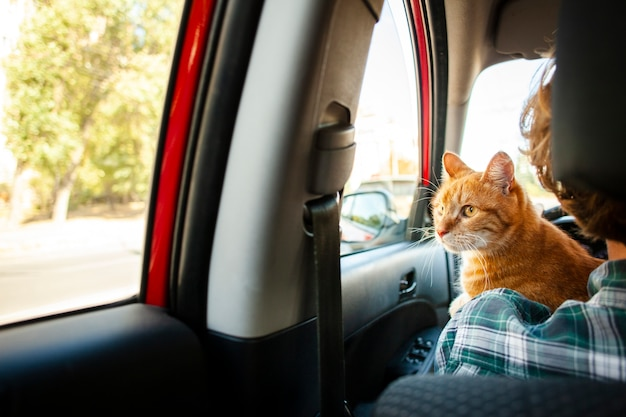 Pleasant Back View Adorable Cat Looking On Window Car Photo Free Evergreenethics Interior Chair Design Evergreenethicsorg