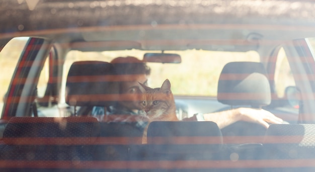 Back view man holding a cat in car Free Photo