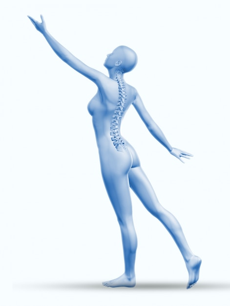 Backbone anatomy Free Photo