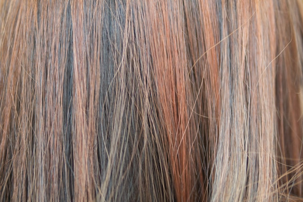 Background of hair dyed color with highlight technique but makes hair damaged and coarse Premium Photo