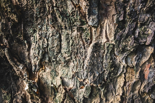 Background of large tree bark Premium Photo