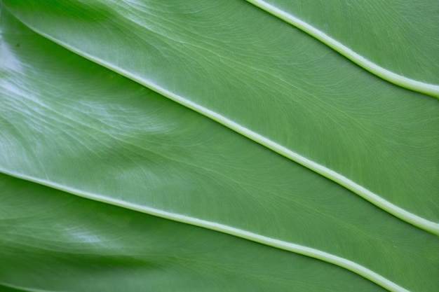 Background leaf pattern and design. Free Photo