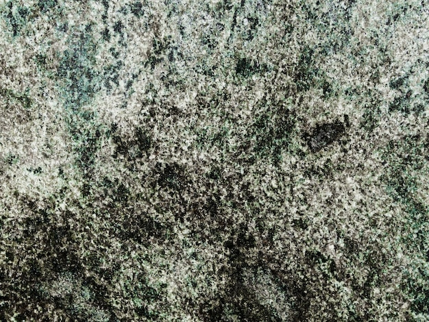 Background of lichen growing on rock Free Photo