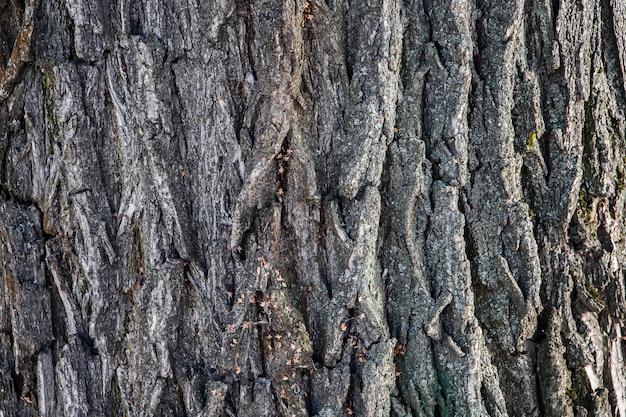 Background of natural tree bark Premium Photo