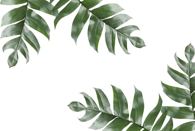 Background Of Tropical Leaves With Copy Space Photo