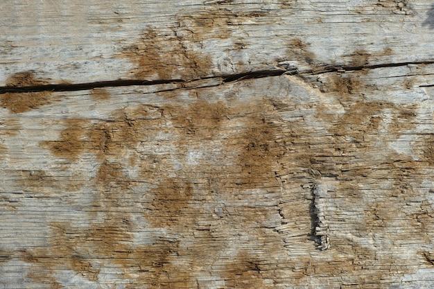 سابقه و هدف از چوب با خزه