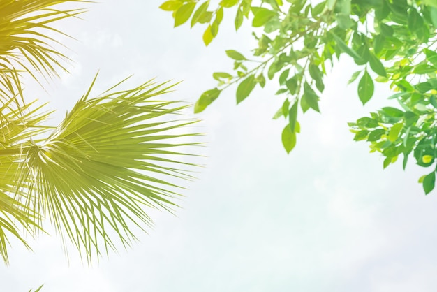Background of palm leaves with sunlight Premium Photo