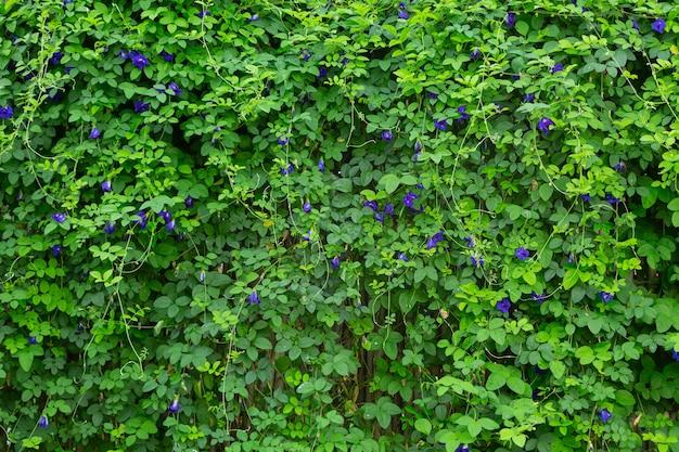 自然の中で新鮮な緑の葉の背景画像 無料写真