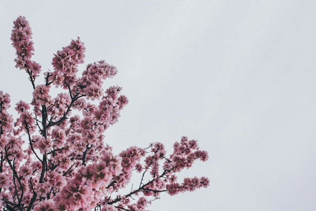 Background spring picture with flowering branches Premium Photo