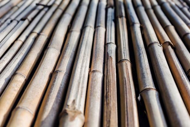 Background texture of bamboo stretching into the future Premium Photo