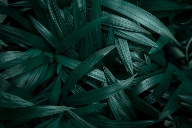 진한 녹색에서 자연 잎의 배경 텍스처입니다. 무료 사진