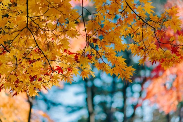 Background texture of yellow leaves autumn leaf background Premium Photo