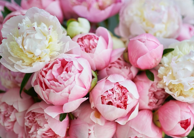 Background with beautiful white and pink flowers peonies. Premium Photo