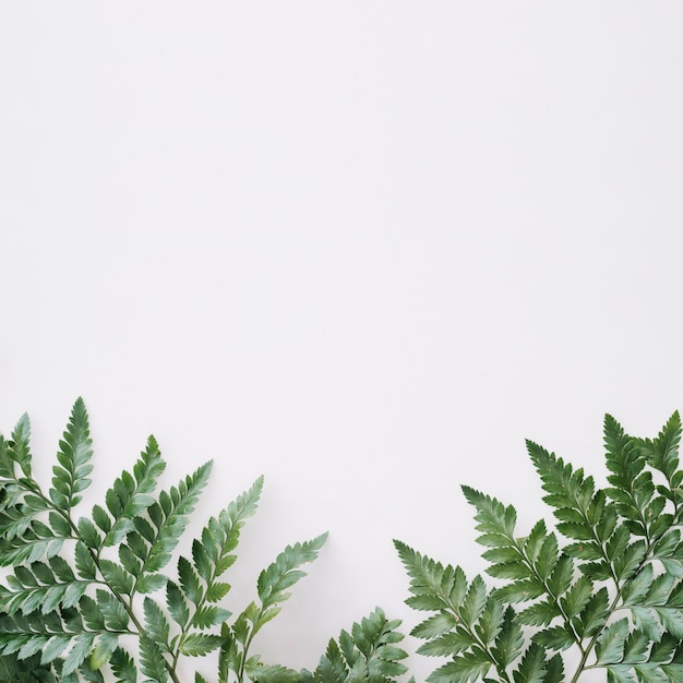 Background with leaves Free Photo