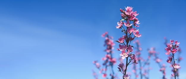 Background with pink blossom. beautiful nature scene with blooming tree branch and blue sky. Premium Photo