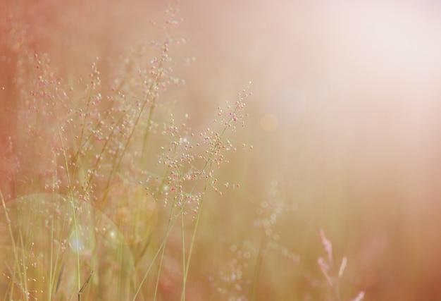 Background with summer flowers, flower field. Premium Photo