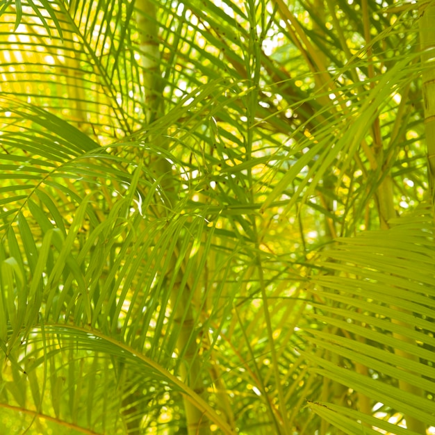 Backgrounds of areca palm tree Free Photo