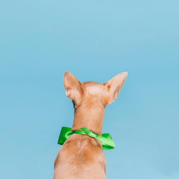 Backview маленькая собака с бабочкой Бесплатные Фотографии