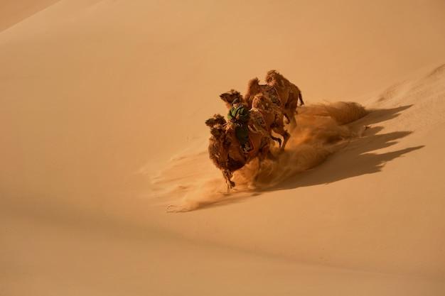 Двугорбый верблюд в пустыне гоби в монголии. верблюды в монгольской пустыне гоби, всадник на верблюдах в пустыне монголии с песчаными дюнами и сухими кустами Premium Фотографии