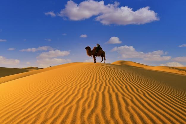 Двугорбый верблюд в пустыне гоби в монголии. Premium Фотографии