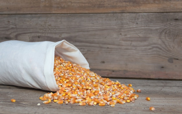 Bag with whole corn to feed animals Free Photo