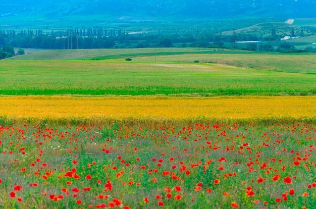 クリミア半島のbakhchisaraiの町のラベンダーとケシの風景フィールド。 Premium写真